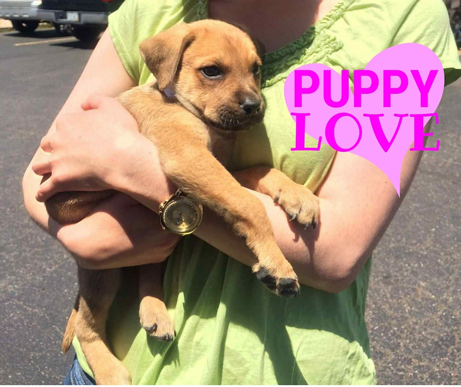 How much does it cost to get a puppy? It can cost from a few hundred dollars to thousand. More dog ownership tips in post.
