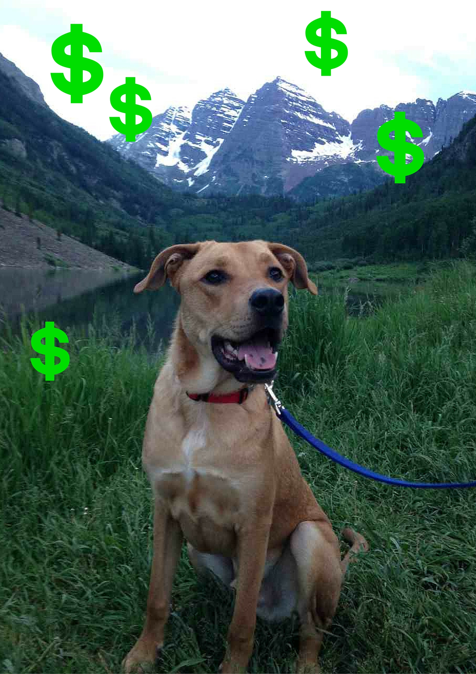 cost-of-having-dog