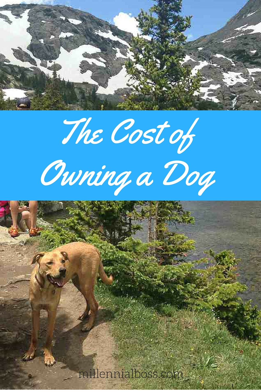 The Cost of Owning A Dog