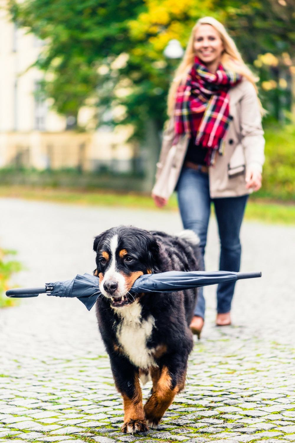 Dog ownership tips | Dog ownership hacks | Dog Ownership Cost | Cost of Owning a dog | cost have dog