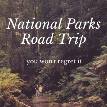 National Parks Road Trip (with a dog)!