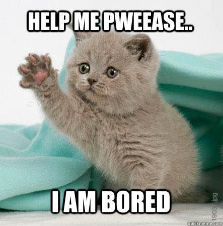 bored-meme-cat