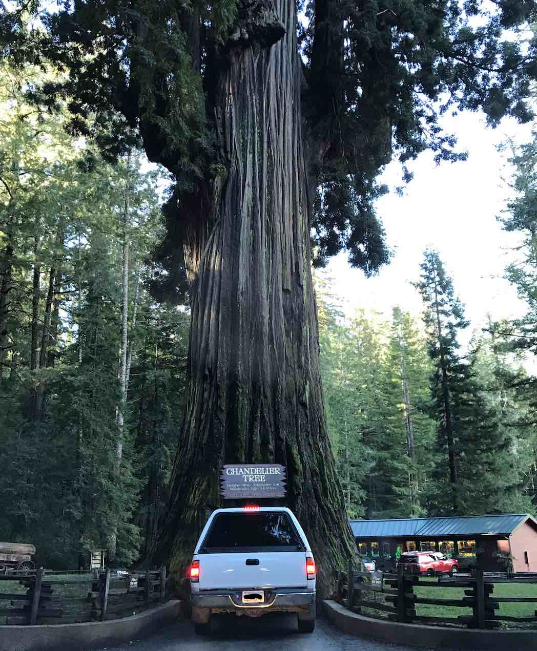 drive-thru-tree-redwoods