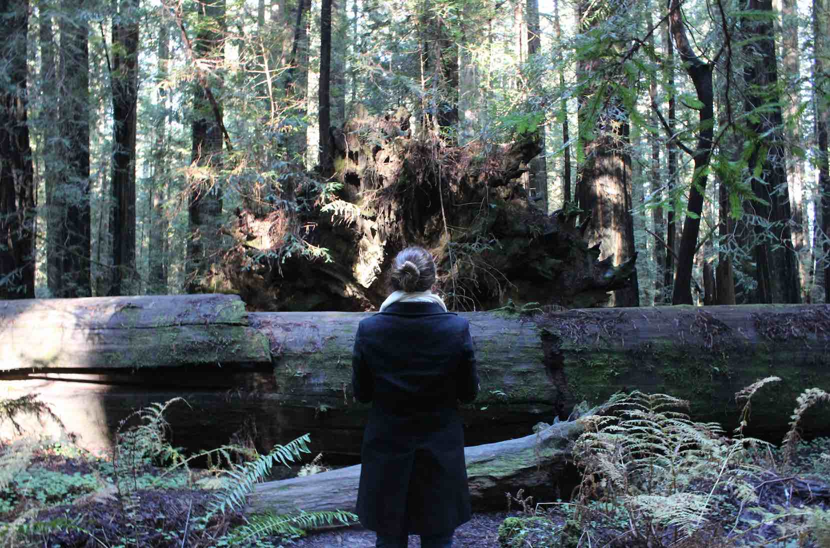 giant-redwoods-trip