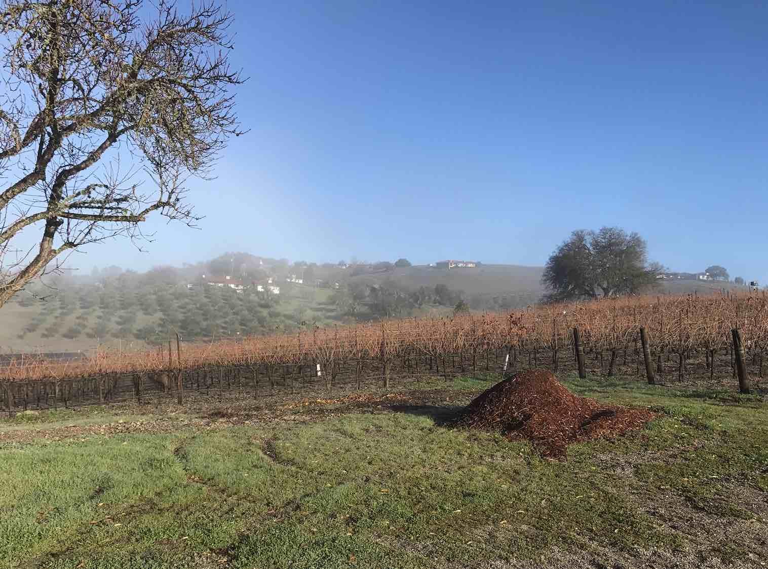airbnb-vineyard