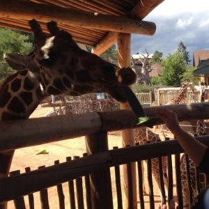 colorado-springs-zoo