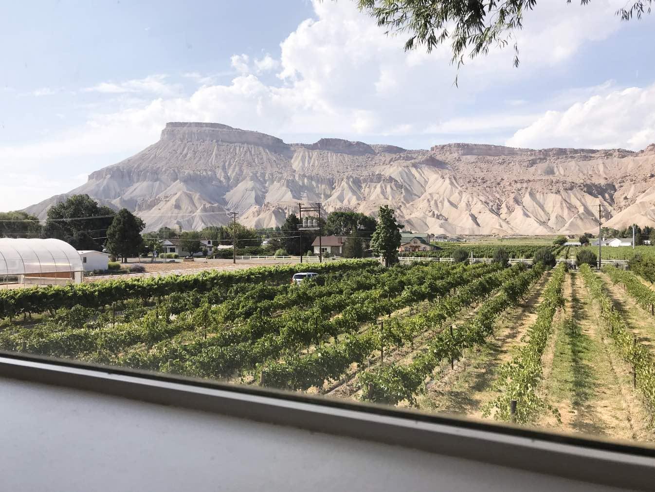maison-winery-palisade-colorado