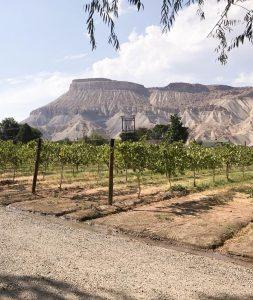 Winery in Palisade Colorado